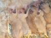 litter02172012_darby_04