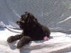 litter03272011_dezi_update7_02