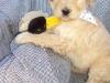 litter04092011_daisy_01
