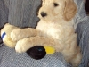 litter04092011_daisy_update1_01