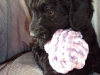 litter04092011_daisy_update1_06