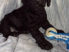 litter04092011_daisy_update1_07