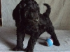 litter04092011_daisy_update2_03