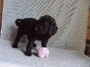 litter04092011_daisy_update2_05
