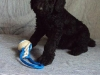 litter04092011_daisy_update2_08