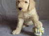 litter04092011_daisy_update2_16