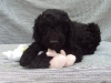 litter04092011_daisy_update3_13