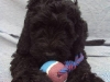 litter04092011_daisy_update4_03