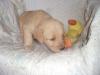 litter07212011_amber_update01_21