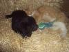 litter07252011_amber_update03_20
