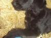 litter07252011_amber_update05_11