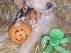 litter07252011_amber_update06_05