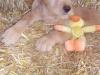 litter07252011_amber_update06_17