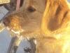 litter07252011_amber_update08_06