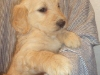 litter07252011_kamryn_update01_09