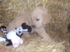litter07252011_kamryn_update02_04