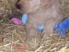 litter07252011_kamryn_update02_08