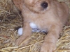 litter07252011_kamryn_update02_16