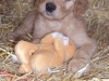 litter07252011_kamryn_update02_24