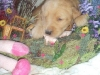 litter07252011_misty_05