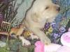 litter07252011_misty_06