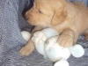 litter07252011_misty_update01_11