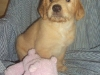 litter07252011_misty_update02_02