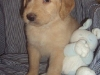 litter07252011_misty_update02_04