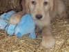 litter07252011_misty_update03_02