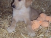 litter07252011_misty_update03_07