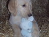 litter07252011_misty_update03_09