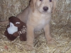 litter07252011_misty_update03_11