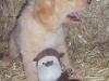 litter07252011_misty_update03_12