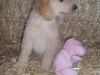 litter07252011_misty_update03_13