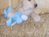 litter07252011_misty_update04_01