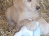litter07252011_misty_update04_09