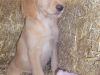 litter07252011_misty_update05_10