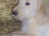 litter07252011_misty_update05_18