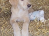 litter07252011_misty_update05_22