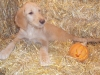 litter07252011_misty_update06_05