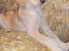 litter07252011_misty_update06_06