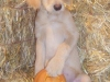 litter07252011_misty_update06_09