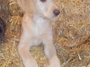 litter07252011_misty_update06_10
